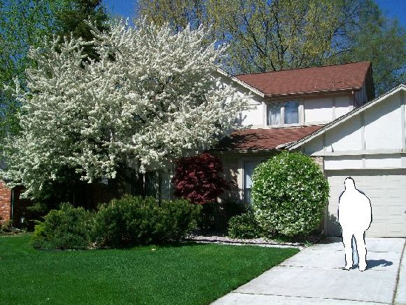 Replacing-Wall-Panels-Suffering-Water-Damage-From-Overgrown-Trees-Too-Close-To-The-House-ParR1-103-Picture-1