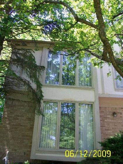 Replacing-Wall-Panels-Suffering-Water-Damage-From-Overgrown-Trees-Too-Close-To-The-House-ParR1-103-Picture-3